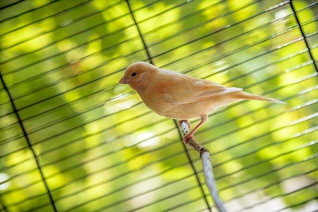 oranžový ptáček